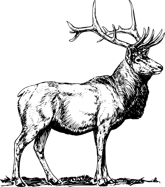 Drawn elk Drawing Simple Drawing Elk photo#26
