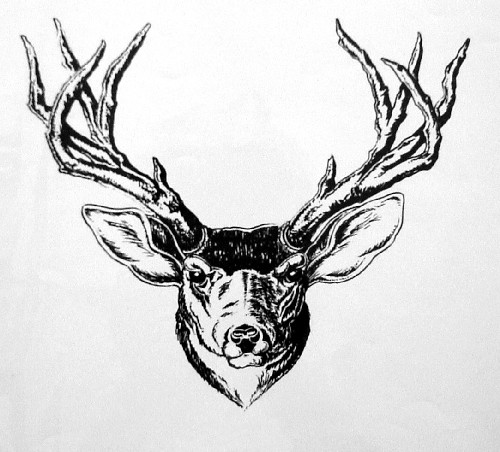 Drawn elk Outline Elk Outline Head photo#9