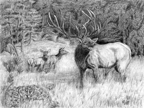 Drawn elk Drawing Tech [Archive] WetCanvas Finished