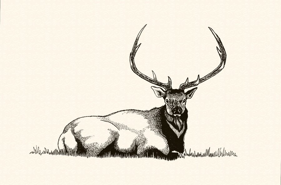 Drawn elk STATION Repose' in by STATION