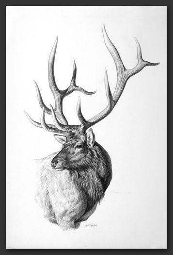 Drawn elk Studio Best Elk tattoo 25+