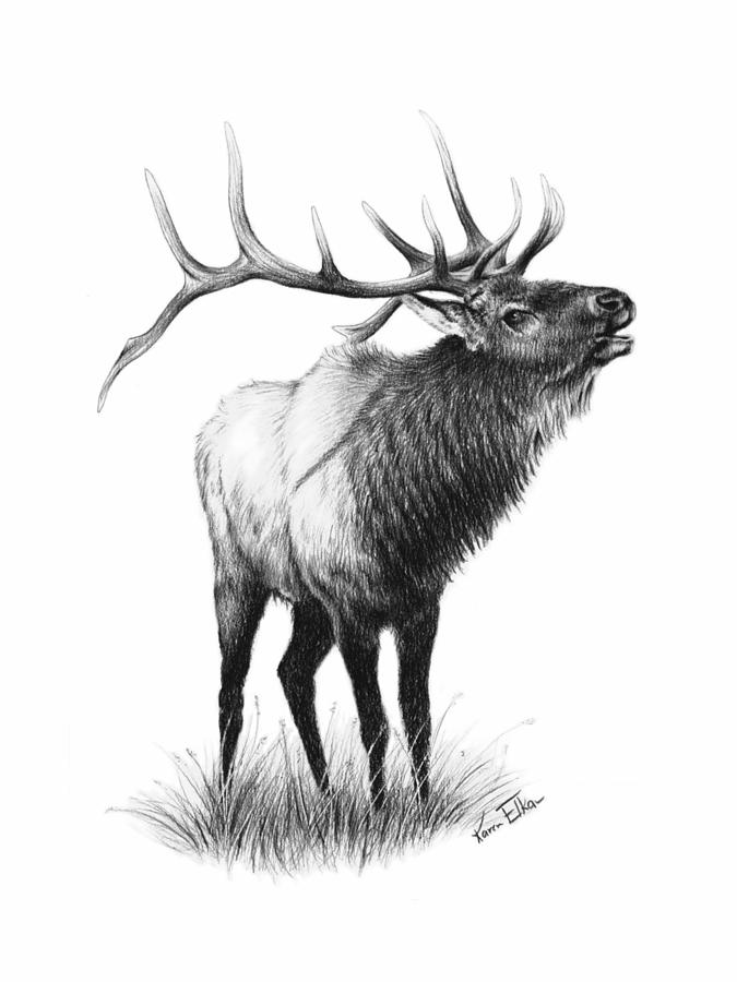 Drawn elk Karen The by Elkan The