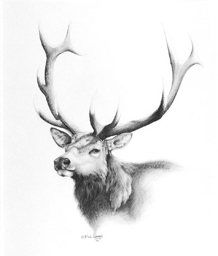 Drawn elk Deer a