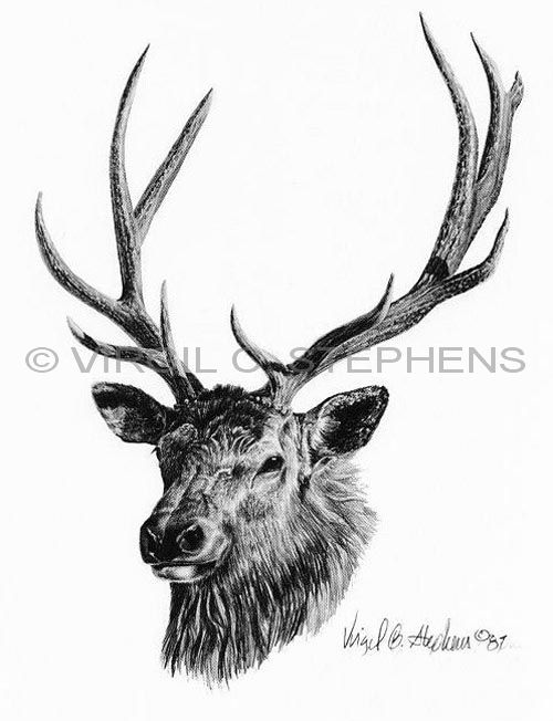 Drawn elk Elk pencil Virgil Big game