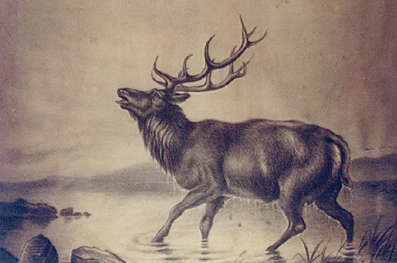 Drawn elk Up marry grandmother charcoal of