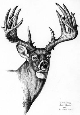 Drawn buck monster Gallery Pinterest  Elk For