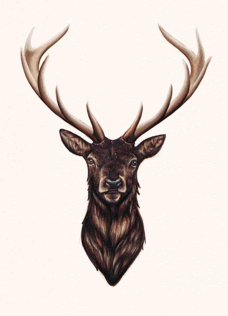 Drawn stag abstract 25+ Best on Elk