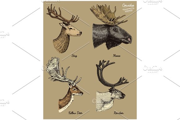 Drawn reindeer creative And stag  roe deer
