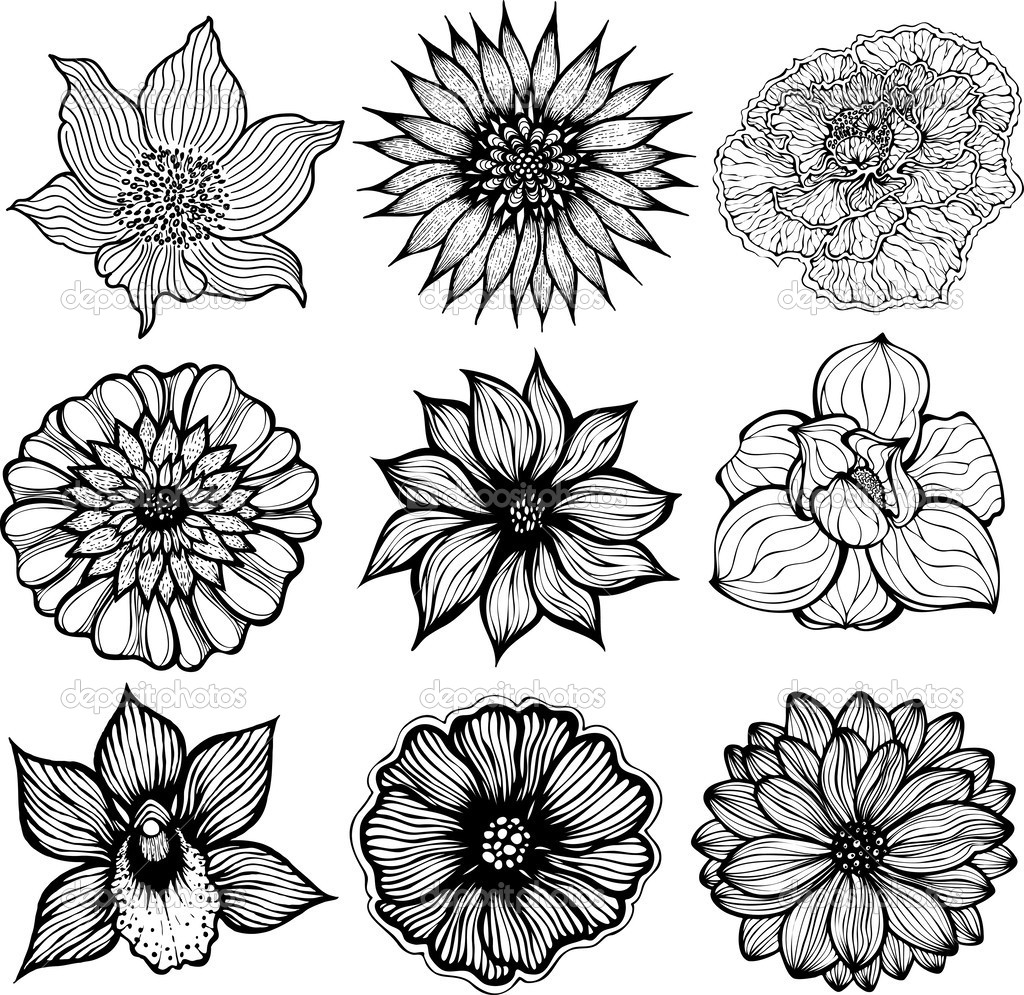 Drawn elower Google pictures Search flowers free