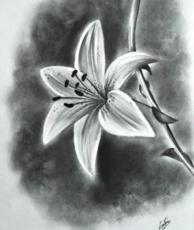 Drawn plant realistic Drawing Pinterest and Drawings Pencil
