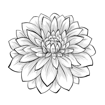 Drawn plant beautiful flower White and flower monochrome
