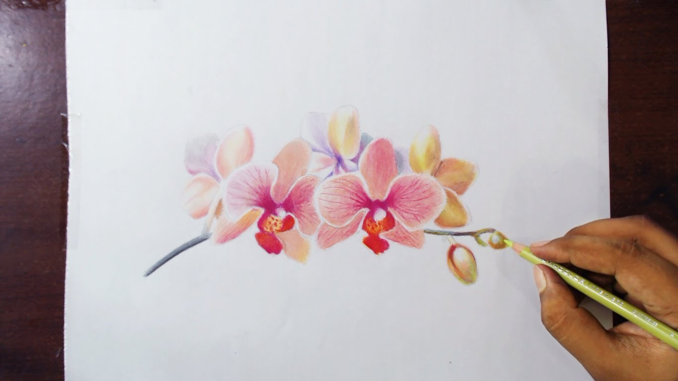 Drawn orchid YouTube pencils Colored pencils Orchids