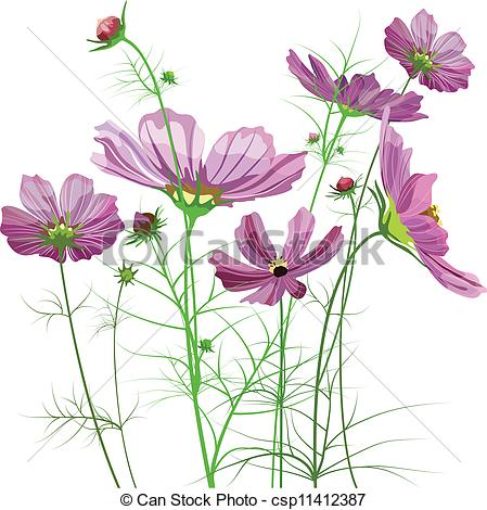 Wildflower clipart cosmos flower Same Cosmos common of of