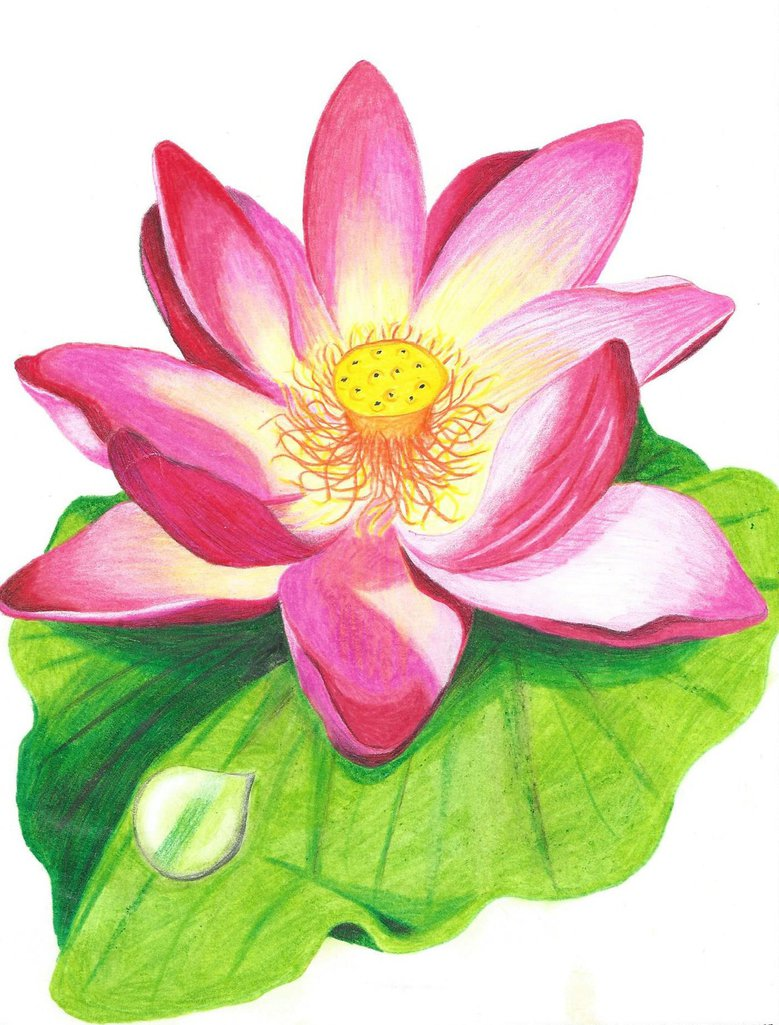 Drawn orchid hand drawn  designs crayons Lotus Pinterest