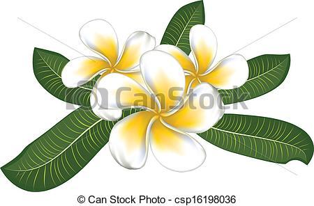 Frangipani clipart caribbean  White plumeria plumeria leaves