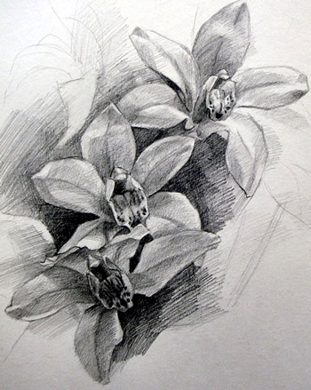 Drawn orchid graphite Basic you helps pencil basic