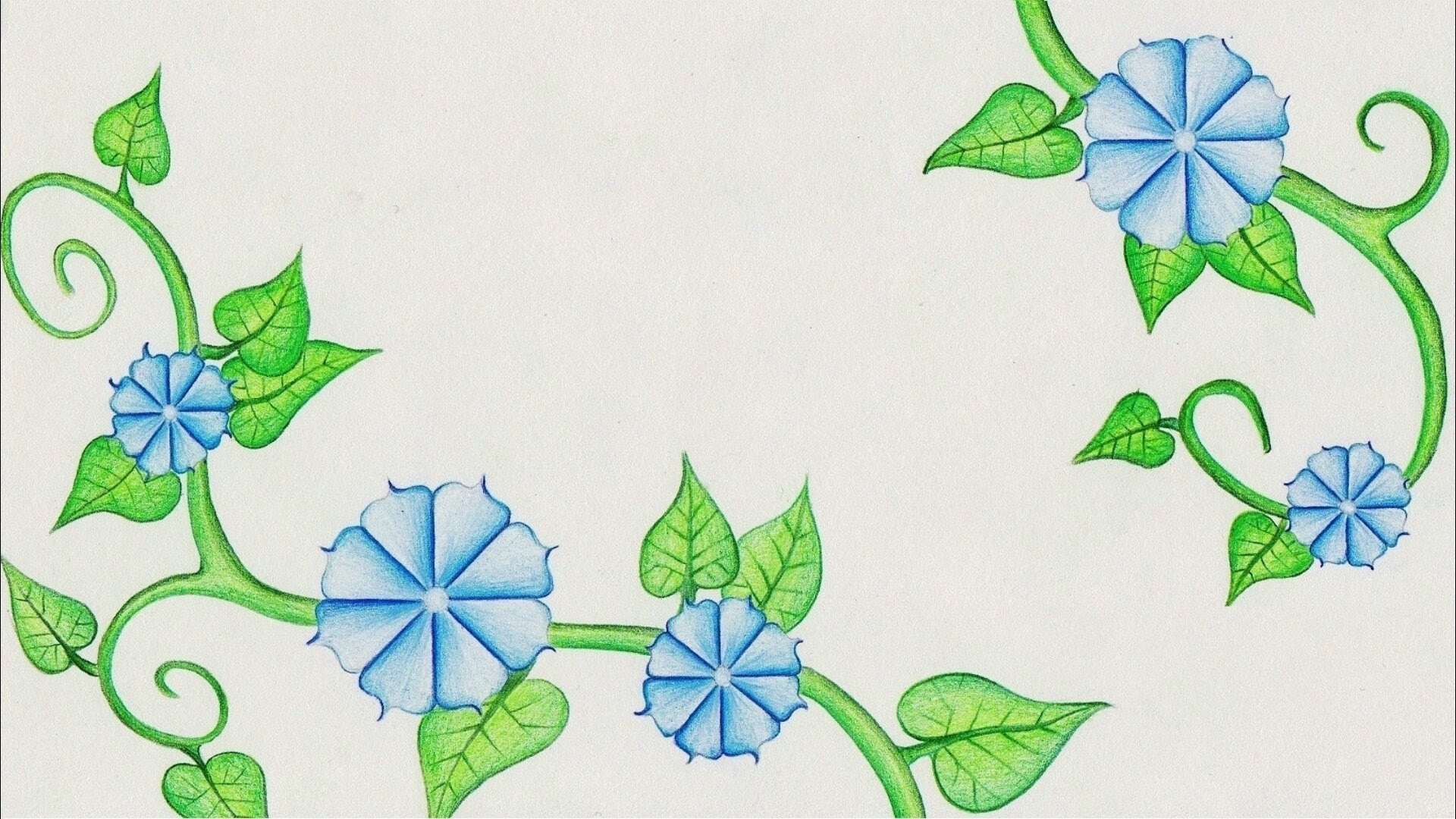 Drawn vine Drawing Flower YouTube Time Glory)