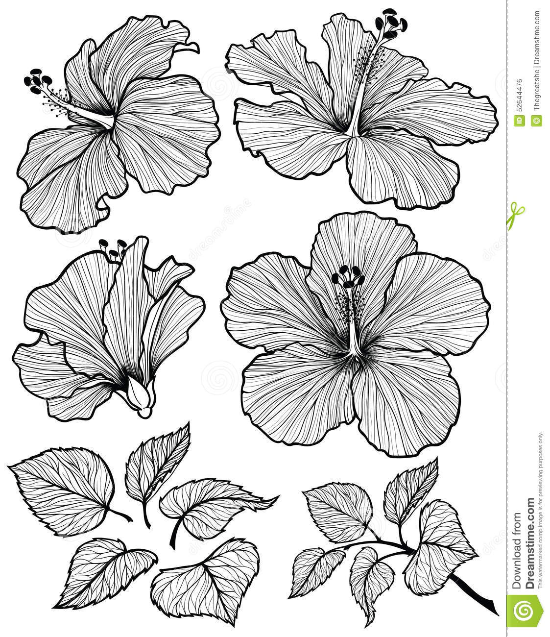 Drawn leaves vintage Set flower  with with