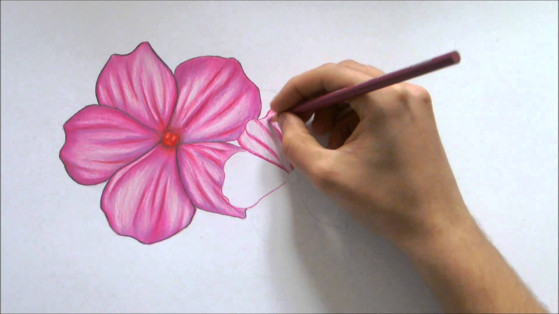Drawn orchid hand drawn Color A Flower Pencil Color