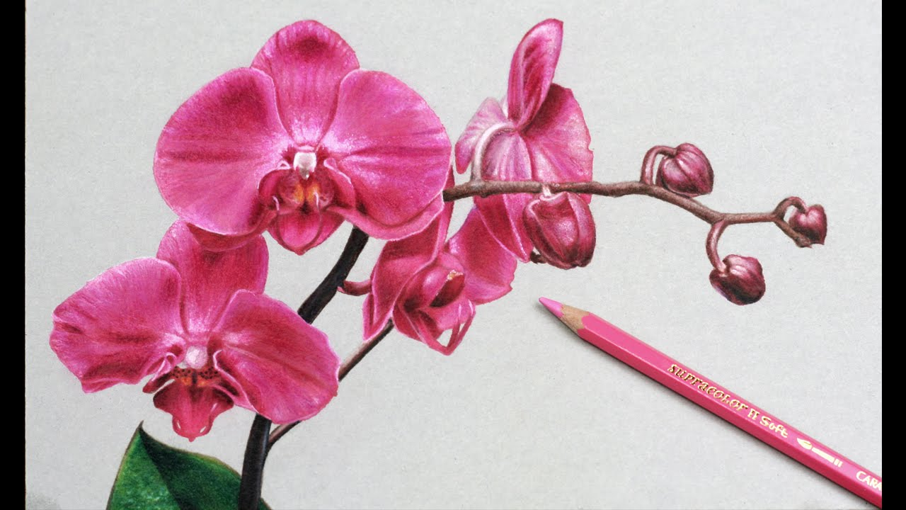 Drawn orchid hand drawn Pencil Realistic by Drawings DArt