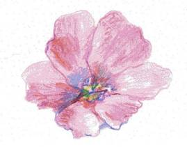 Drawn orchid hand drawn & & How How to
