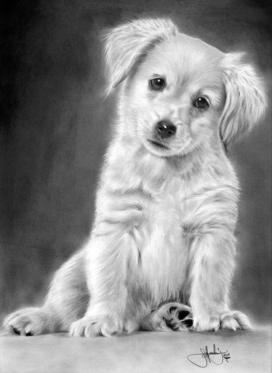 Drawn puppy golden retriever puppy Drawings Drawing Dog on Best