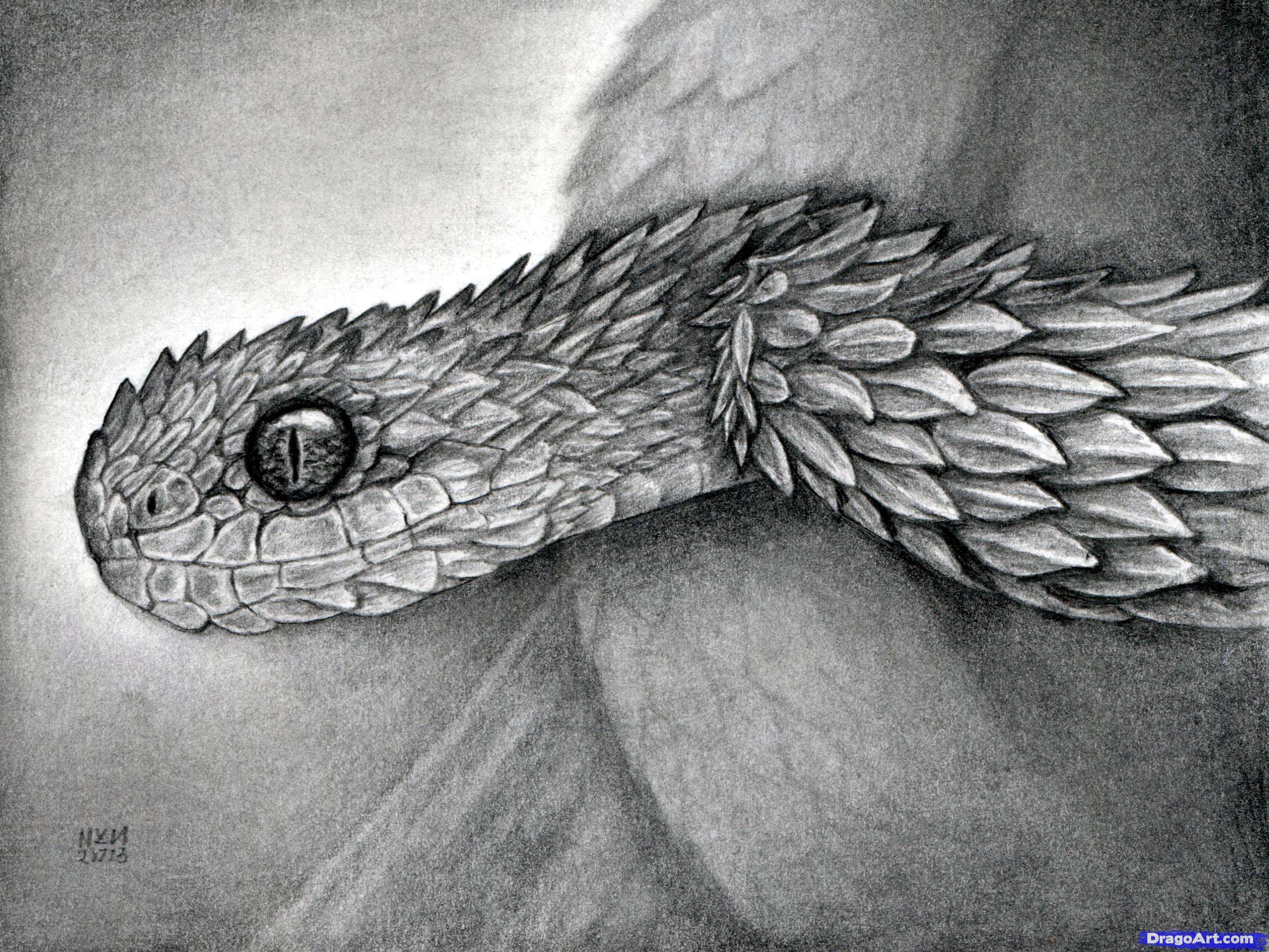 Drawn bush realistic  Viper Atheris to Snake
