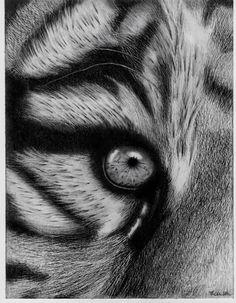 Drawn eyeball charcoal Tiger drawing Art tarantula Eye