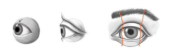 Drawn eyeball eyelid Searle: forms eye illustration lines