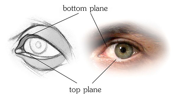 Drawn eyeball eyelid The top How Structure of