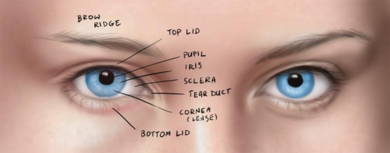 Drawn eyeball one eye Drawing  eyes