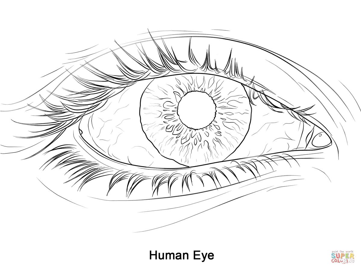 Drawn eyeball printable Coloring games: Coloring Puzzle page