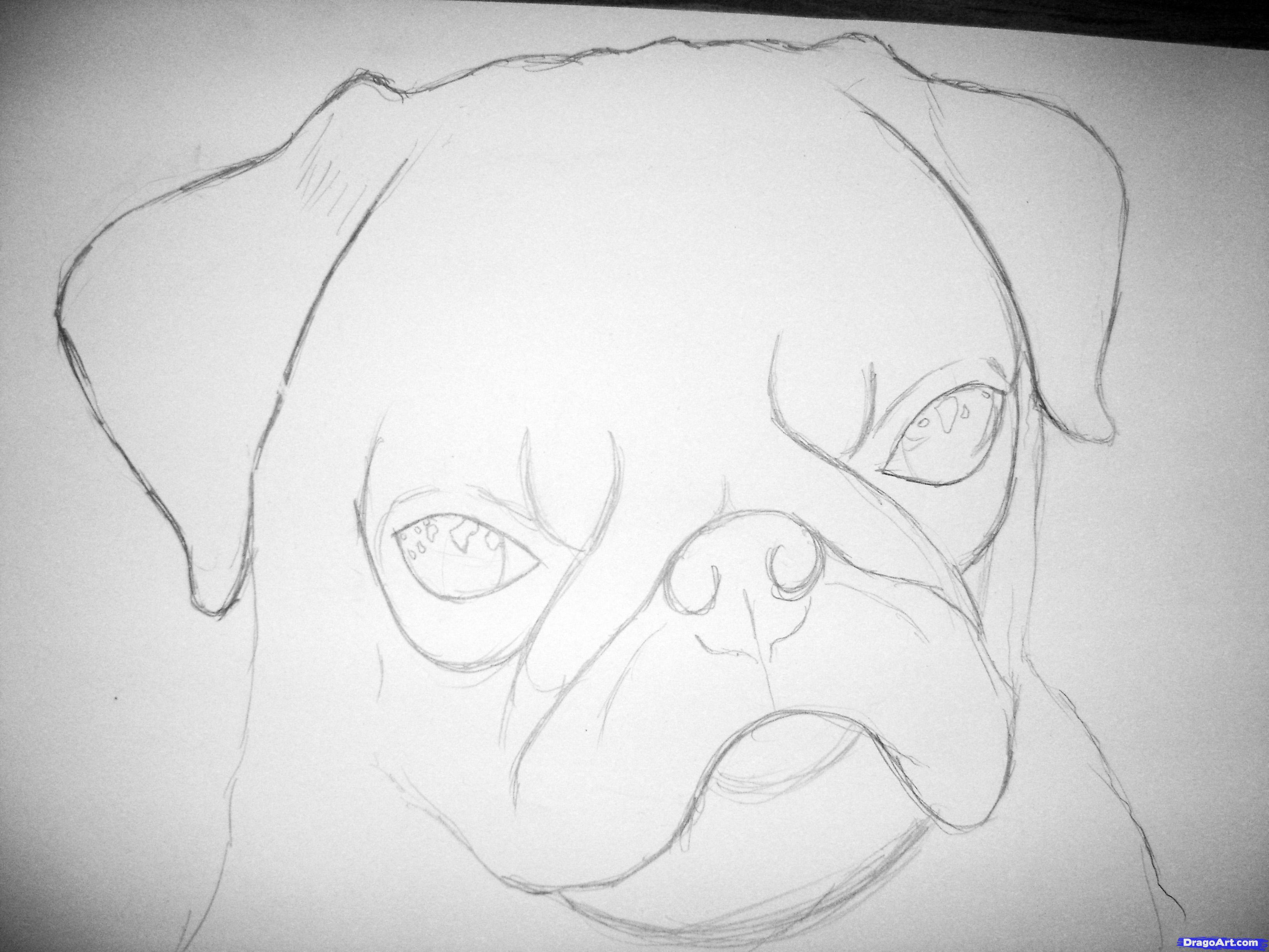 Drawn pug sketch Realistic pug draw step (3264×2448