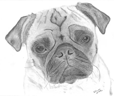 Drawn pug sketch Face drawing Drawing Pug dog