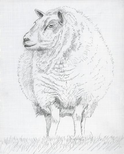 Drawn sheep pencil drawing Drawing Drawing Sheep Sheep face