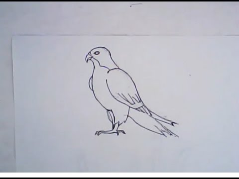 Drawn falcon Draw drawing) drawing) How to