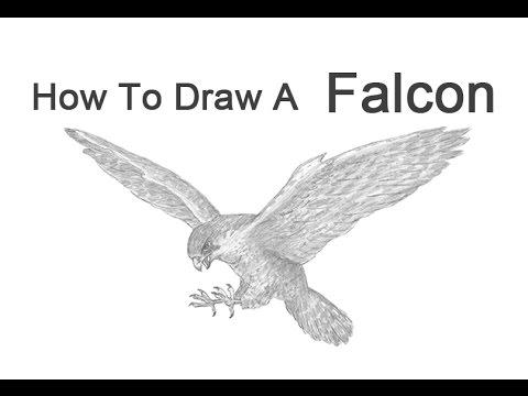 Drawn falcon How2DrawAnimals? a Peregrine Falcon Draw