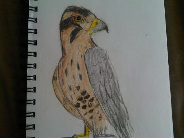 Drawn falcon Falcon drawn falcon by Crayon