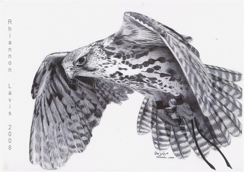 Drawn falcon  Falcon Hope oddballoffun on