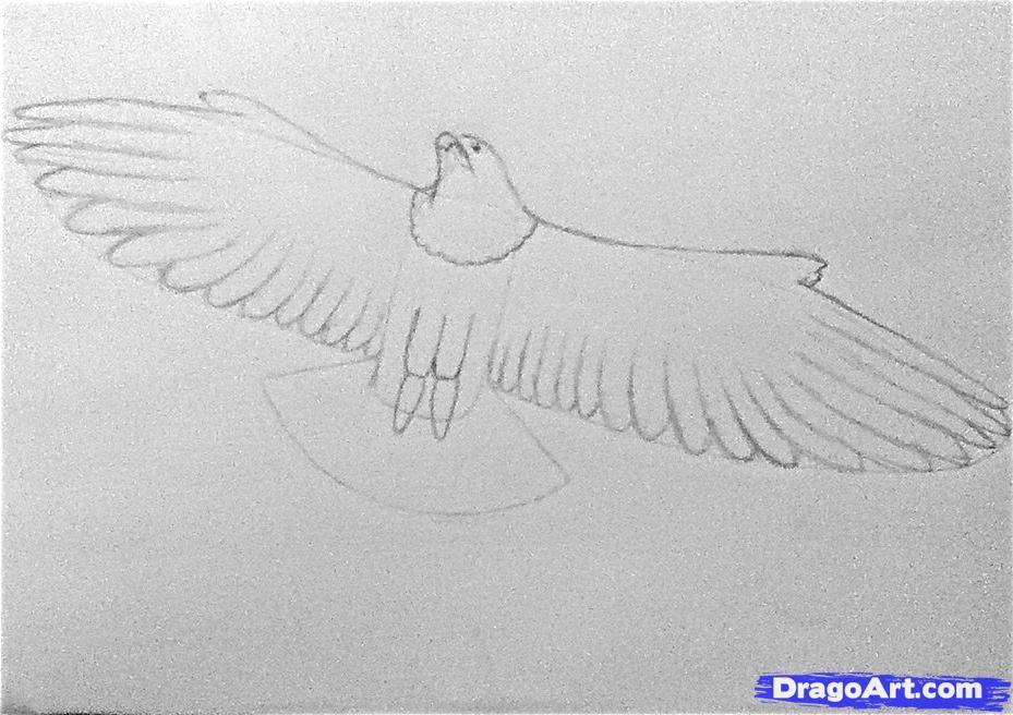 Drawn falcon easy Falcon Animals a step peregrine