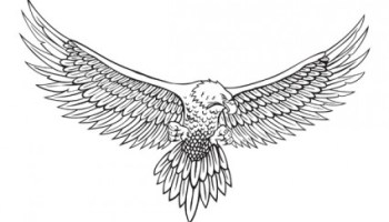 Drawn falcon easy For eagle step video tutorial