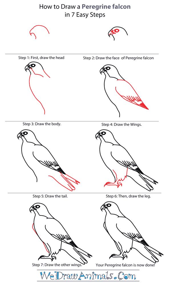 Drawn falcon easy A to Step Peregrine Draw