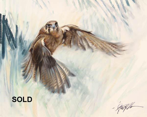 Drawn falcon falcon wing Morvell Wildlife Morvell  Artist
