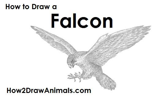 Drawn falcon falcon wing A How to a Draw