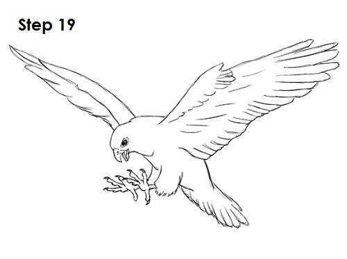 Drawn falcon falcon wing A 19 How Draw Falcon