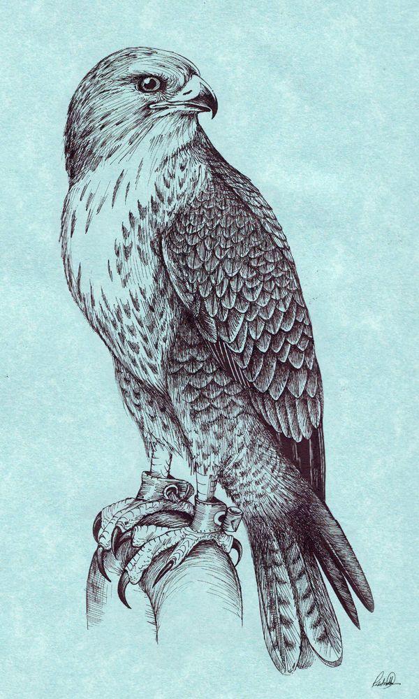 Drawn hawk mean Best tattoo Falcon deviantart Peregrine