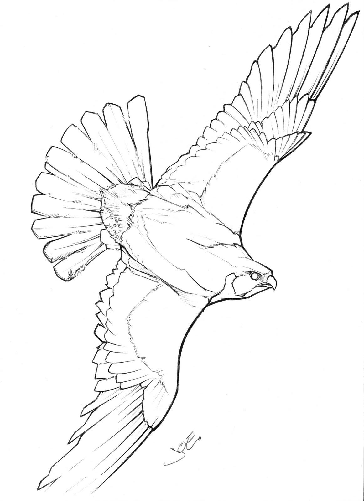 Peregrine Falcon clipart flight drawing Tatoo Interest and Interest flight