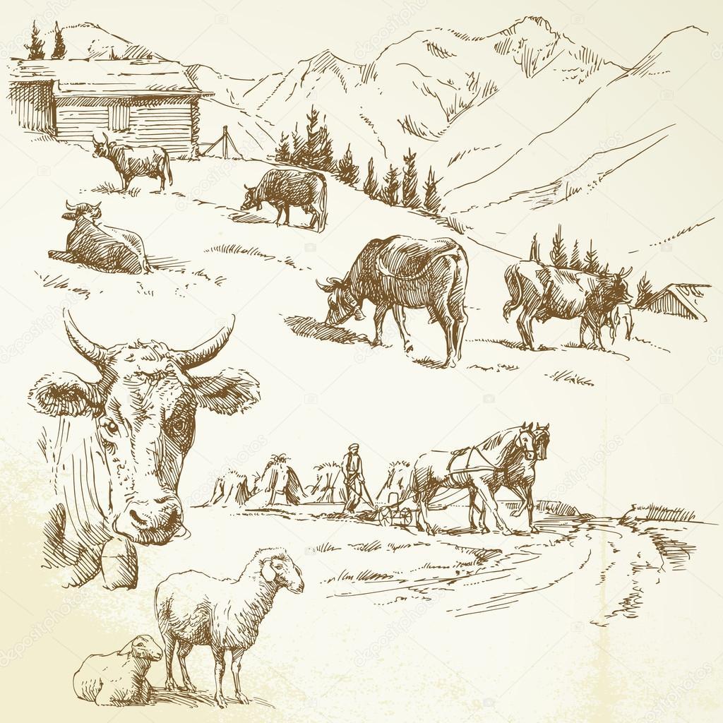 Drawn farm Stock #13808850 drawn — farm