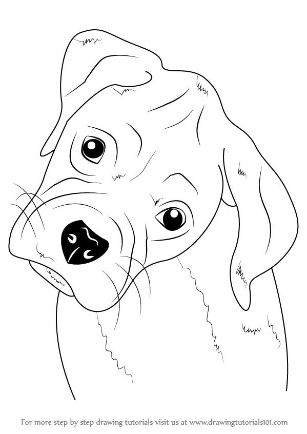 Drawn puppy boxer Step Puppy Step Farm Draw