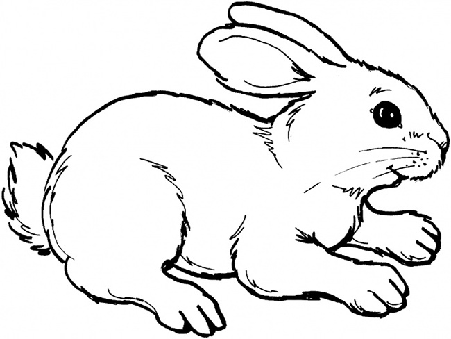 Drawn rabbit template Free Template Farm Rabbit Templates